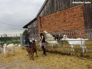 Tiere auf dem Streichelbauernhof: Ziegen und Kinder