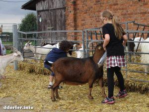 Tiere auf dem Streichelbauernhof: Kinder füttern Ziegen