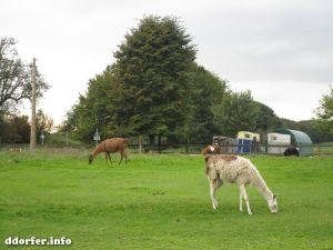Kinderbauernhof Düsseldorf: Lama