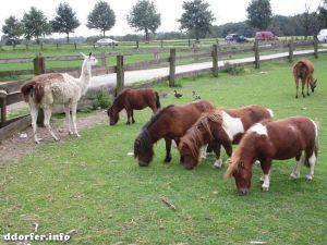 Gut Grütersaap Streichelbauernhof: Ponys