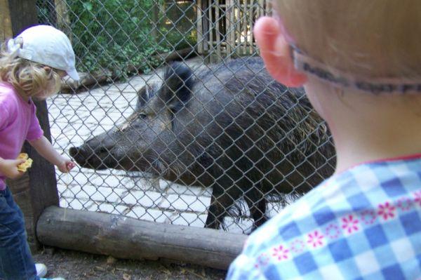 Wildpark-wildschwein1