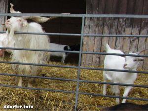 Kinderbauernhof Düsseldorf: Ziegen und Bock