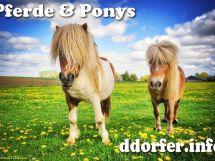 Ponyreiten in Düsseldorf